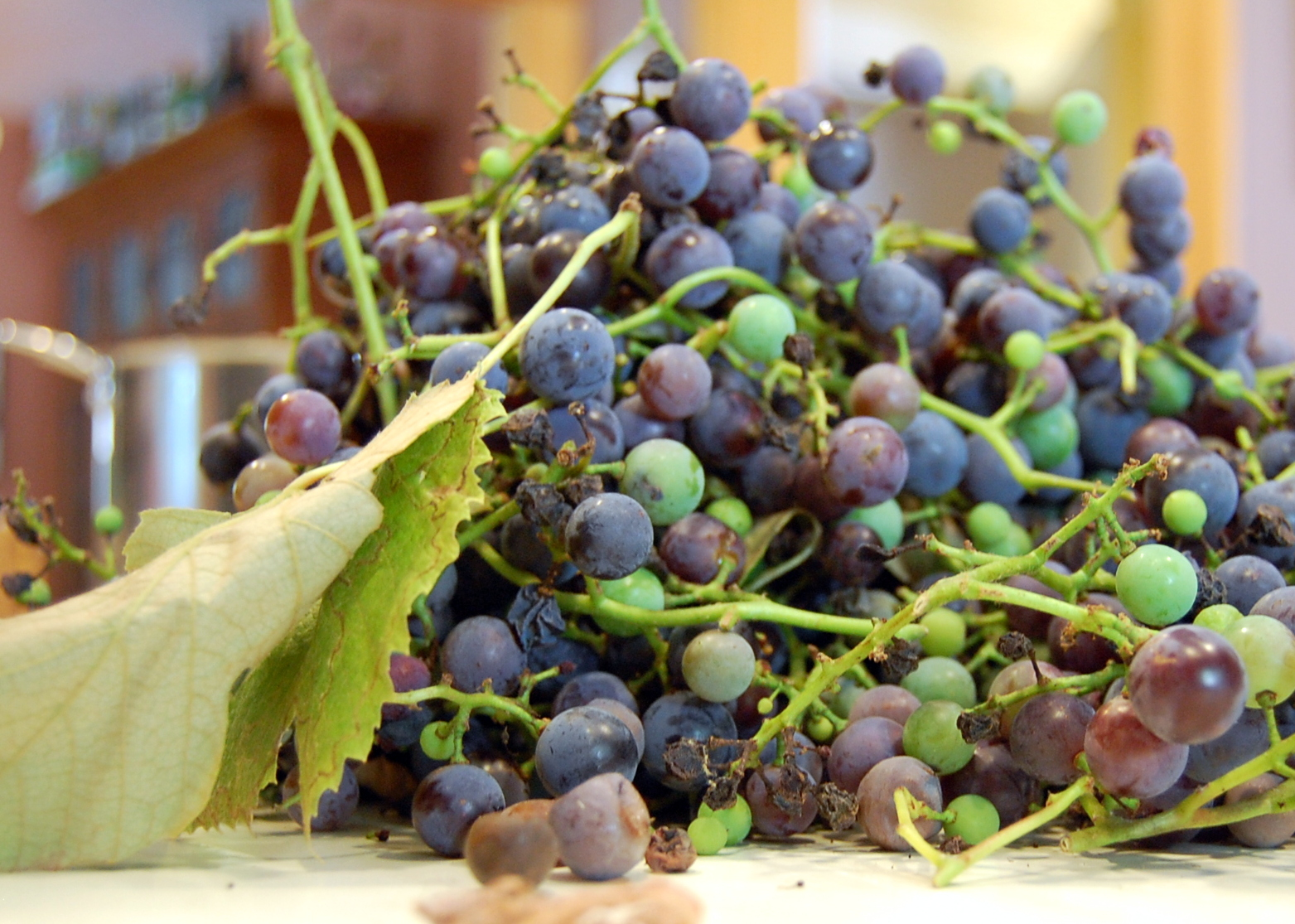 Spoiled Grapes On The Vine Stock Photo, Picture And Royalty Free ...